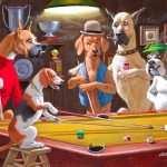 Dog's: Habilidade