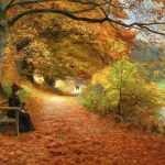 Caminho das Árvores no Outono